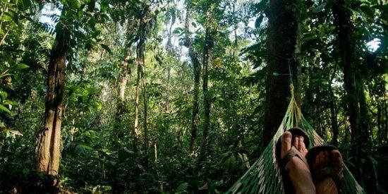Genieten van de natuur door hangmat bewust en boomvriendelijk te gebruiken